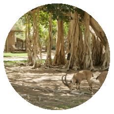 The Botanical Garden at Kibbutz Ein Gedi